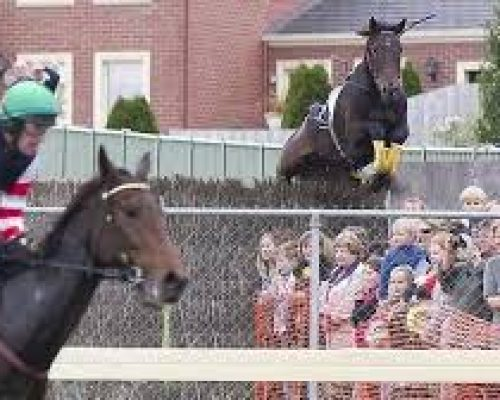 Wbool horse jump into crowd