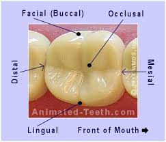 tooth-surfaces